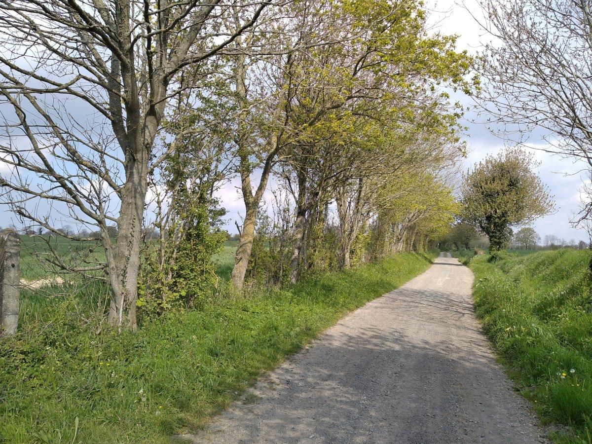 Chemin après la Guilloterie, vers La Rondehaye.